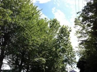 f:id:Magnoliarida:20130622224807j:image