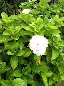 f:id:Magnoliarida:20130630232123j:image