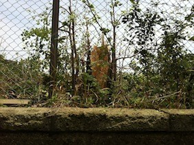 f:id:Magnoliarida:20130630235336j:image