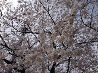f:id:Magnoliarida:20150330143142j:image