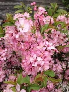 f:id:Magnoliarida:20150330143148j:image