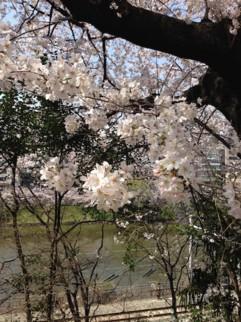 f:id:Magnoliarida:20150330174304j:image