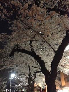 f:id:Magnoliarida:20150331003852j:image