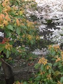 f:id:Magnoliarida:20150401022601j:image