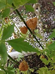 f:id:Magnoliarida:20150727130146j:image