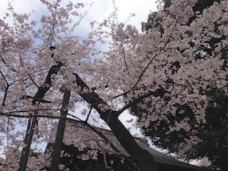 f:id:Magnoliarida:20160401152433j:image