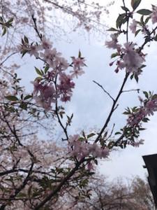 f:id:Magnoliarida:20160401152536j:image