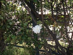 f:id:Magnoliarida:20160418004854j:image