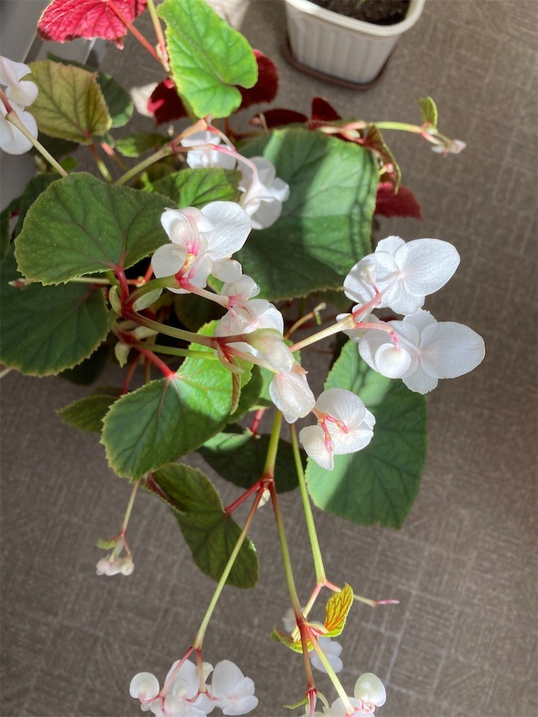 f:id:Magnoliarida:20201016123524j:image