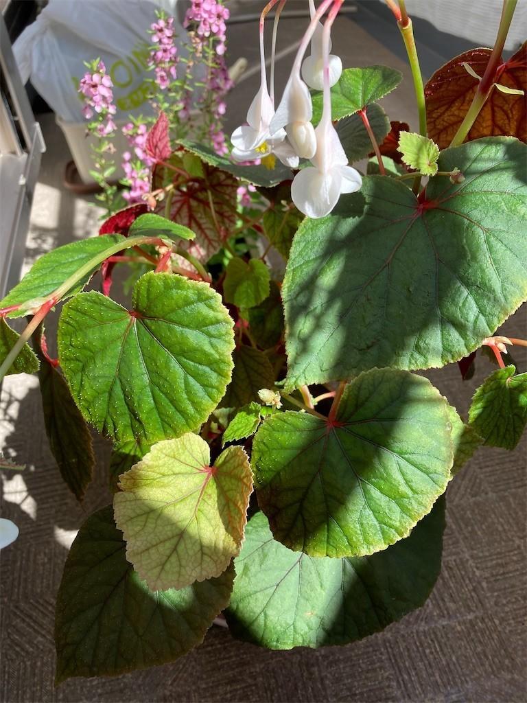 f:id:Magnoliarida:20201016123805j:image