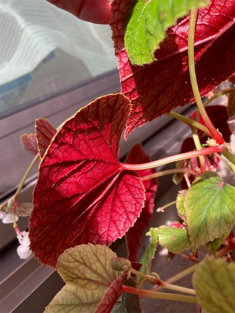 f:id:Magnoliarida:20201016124008j:image