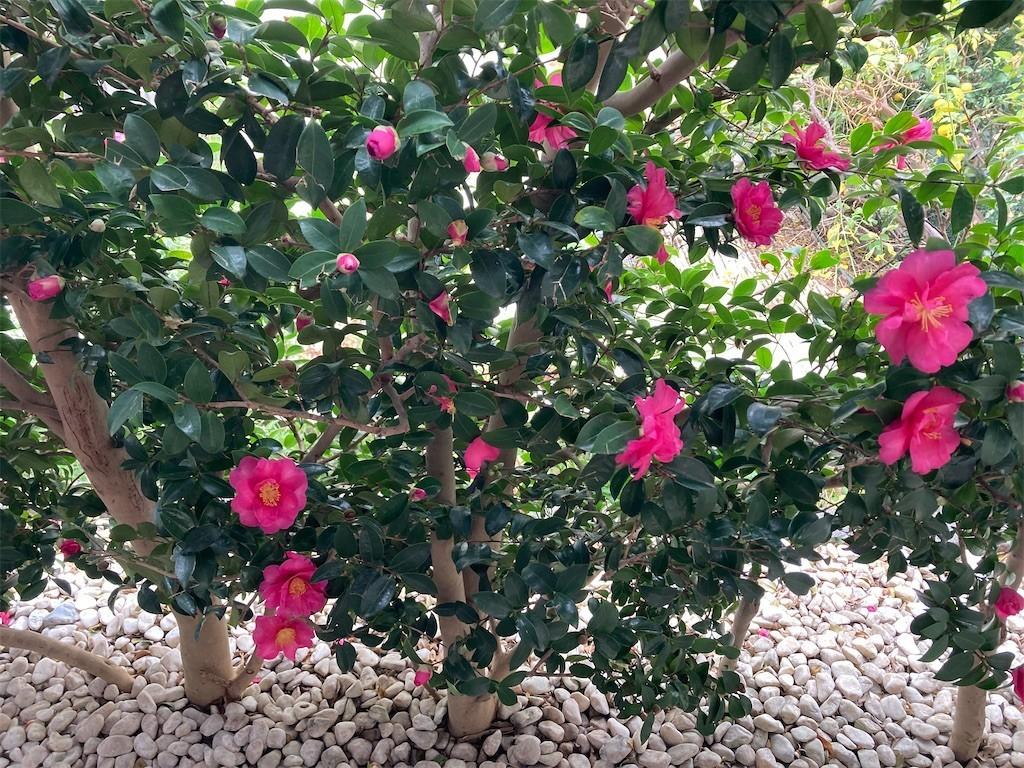 f:id:Magnoliarida:20201127153826j:image