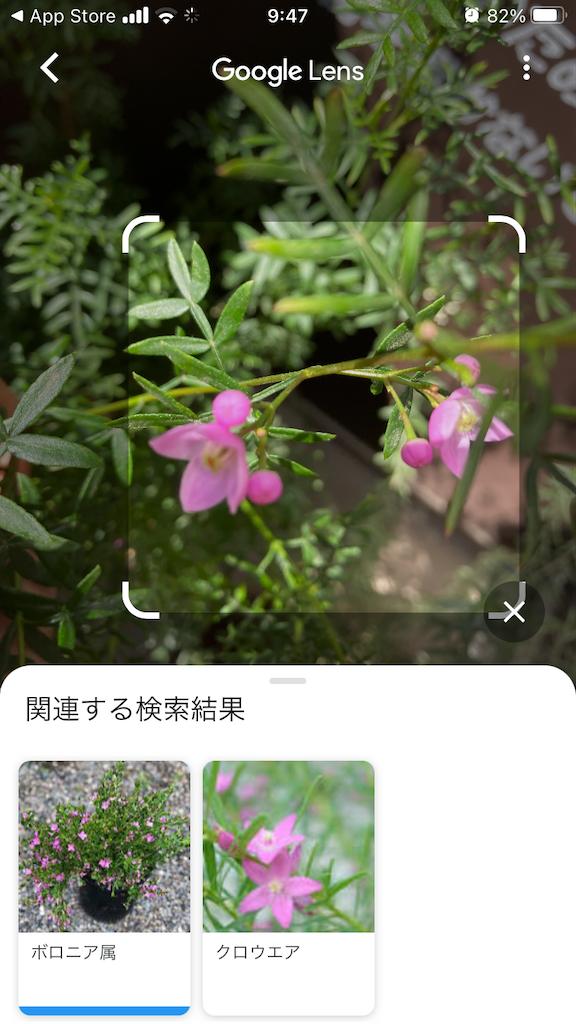 f:id:Magnoliarida:20210409095003p:image
