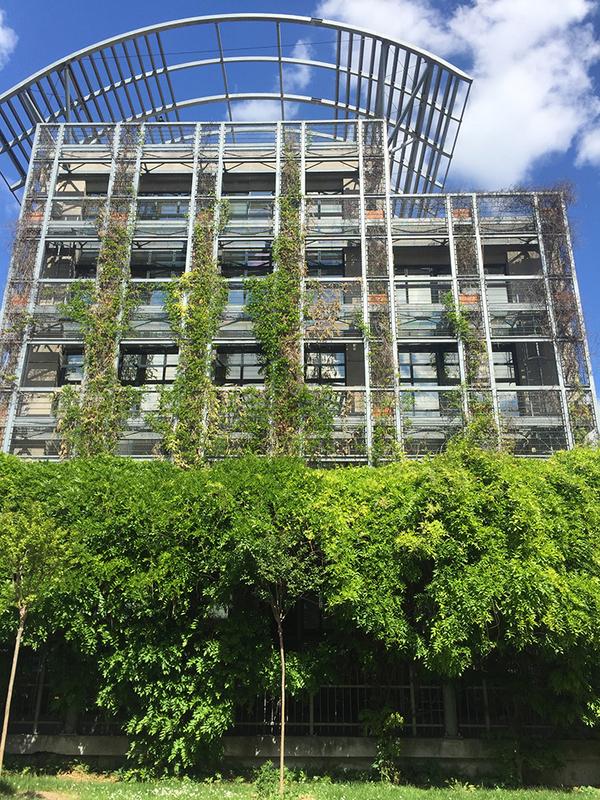 蔦と近代建築