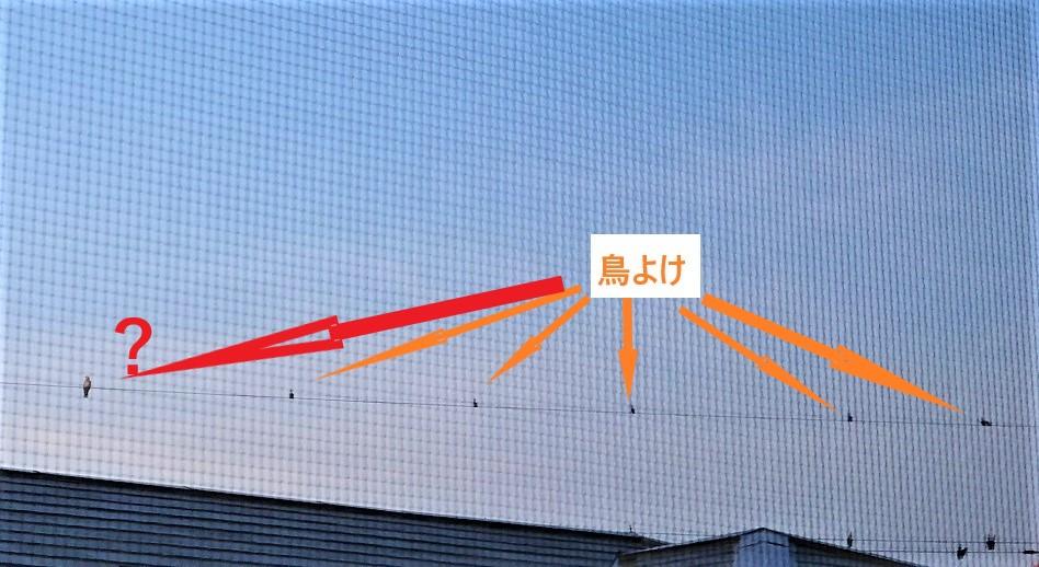 f:id:Masa_S:20200503065439j:plain