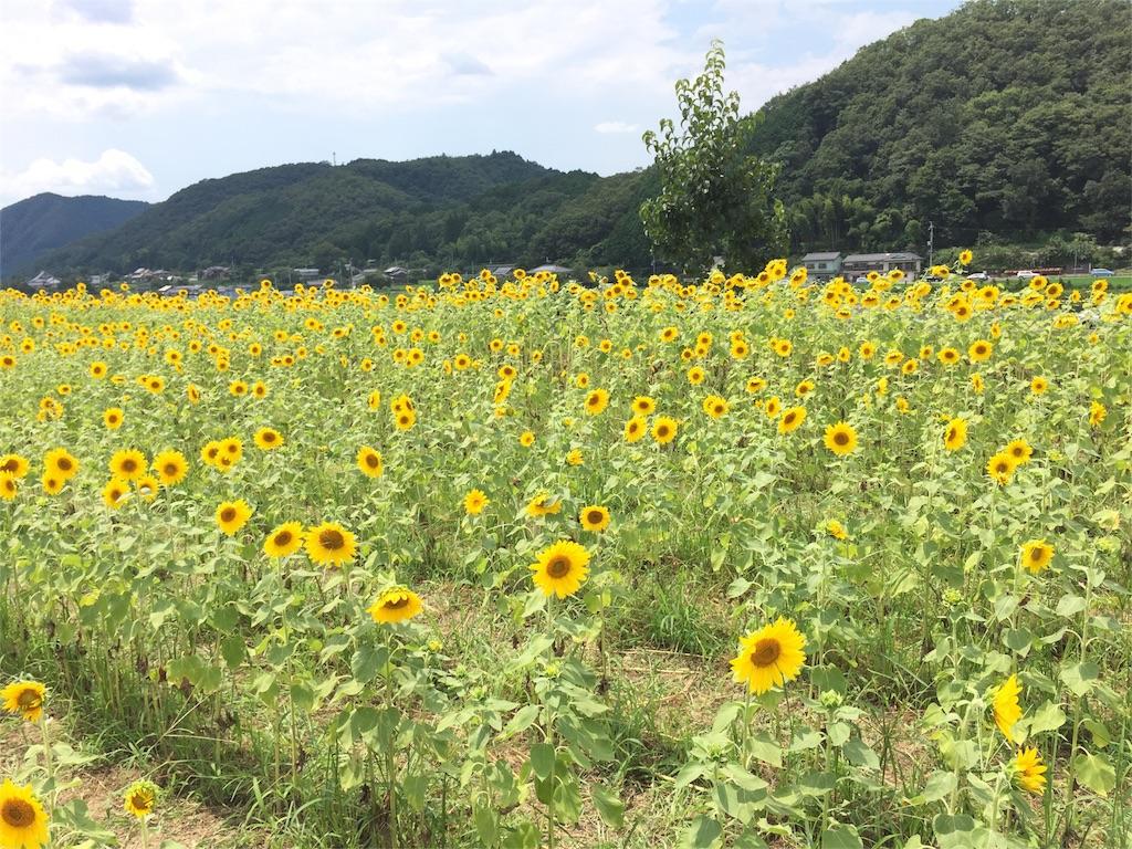 f:id:Masae_t:20160806135537j:image