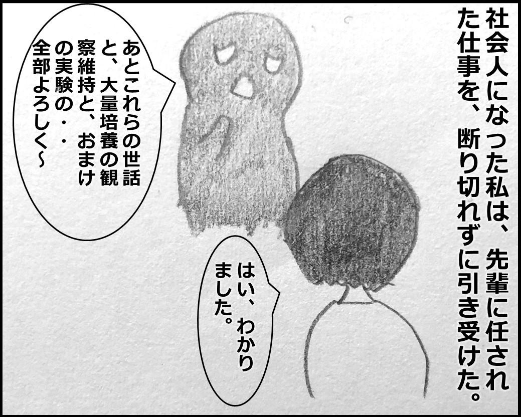 f:id:Megumi_Shida:20191104160750j:plain