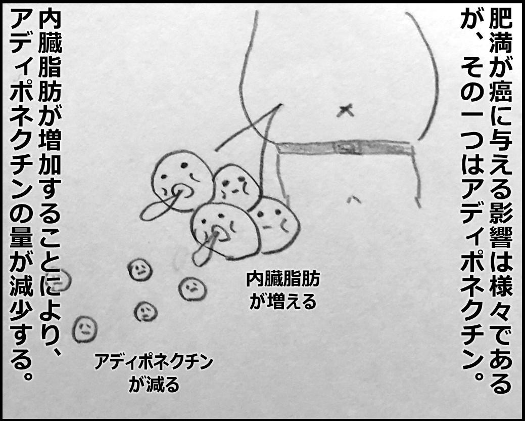 f:id:Megumi_Shida:20191116174221j:plain