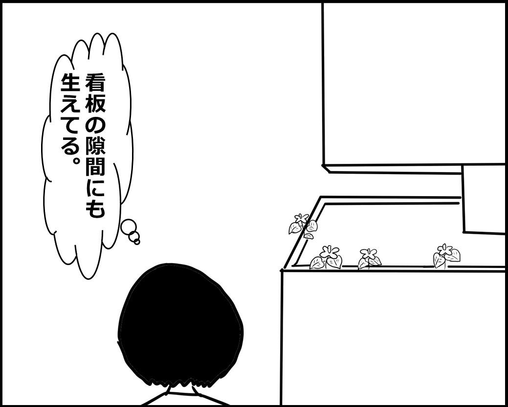 f:id:Megumi_Shida:20200612085709j:plain