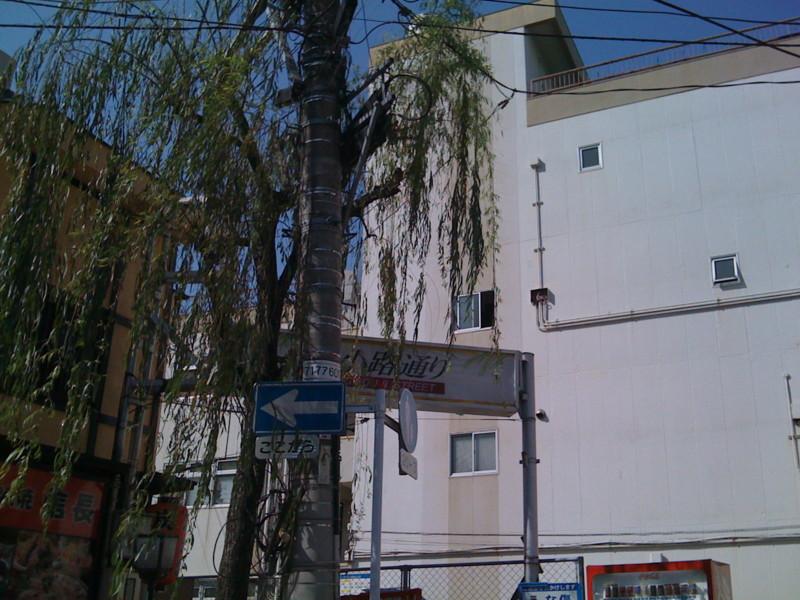 f:id:Michiko_Kurino:20090501152453j:image:w200:left