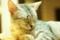 [新宿][猫カフェ][きゃりこ][えのき]