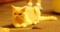 [新宿][猫カフェ][きゃりこ][ピピ]