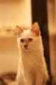 [新宿][猫カフェ][きゃりこ][琥珀]