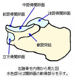 f:id:MihoKondo:20180408002814j:plain