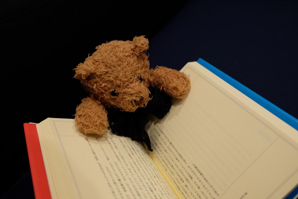 読書する熊