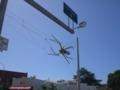 Big Spider / Townsville QLD