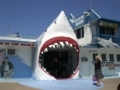 Big Shark / Harvey Bay NSW