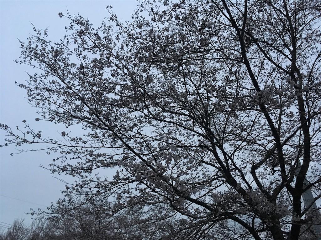 f:id:Mitsuhiko:20170410203101j:image