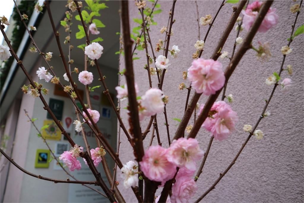 f:id:Mizuho_ss:20170326054452j:image