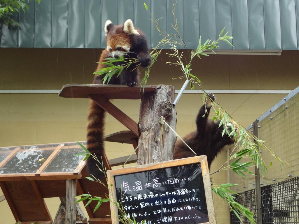 f:id:Mizukame:20160917210521j:plain