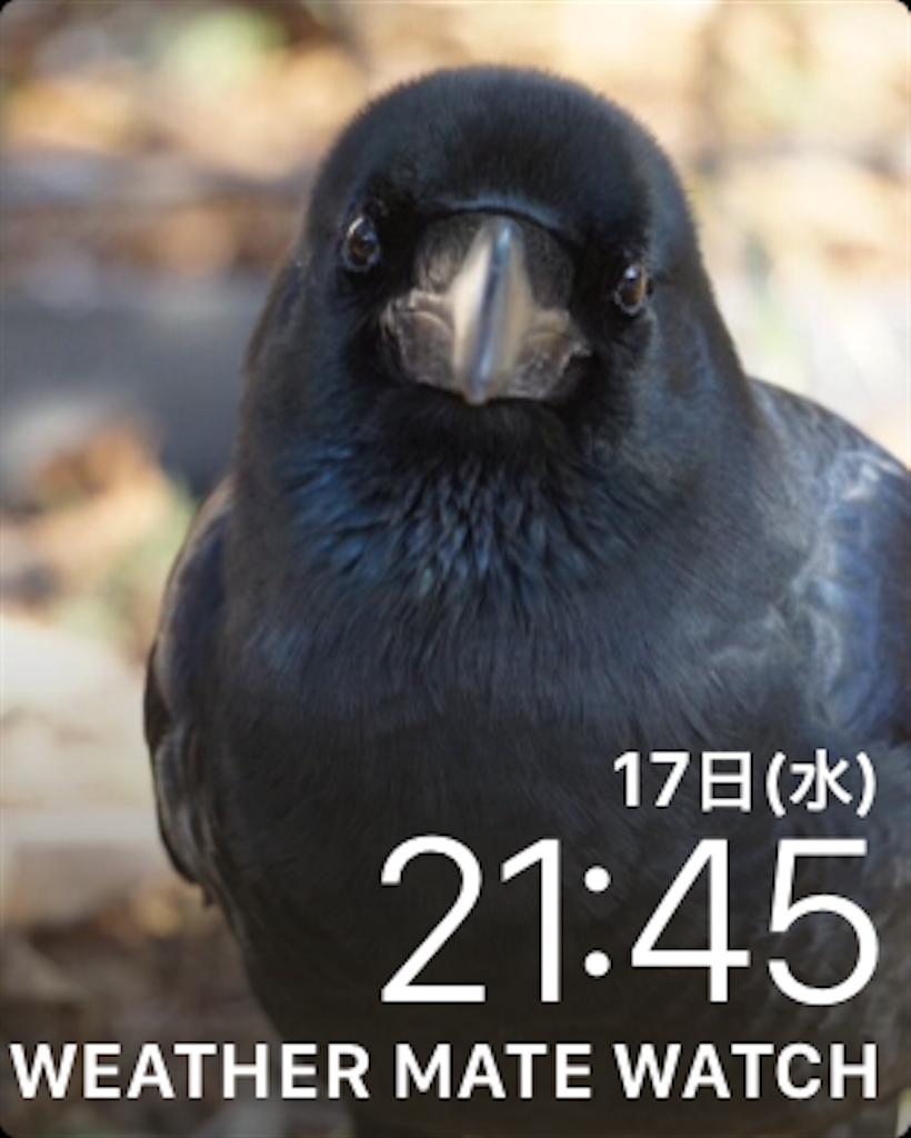 f:id:MizukiTakamagahara:20180117214745p:image