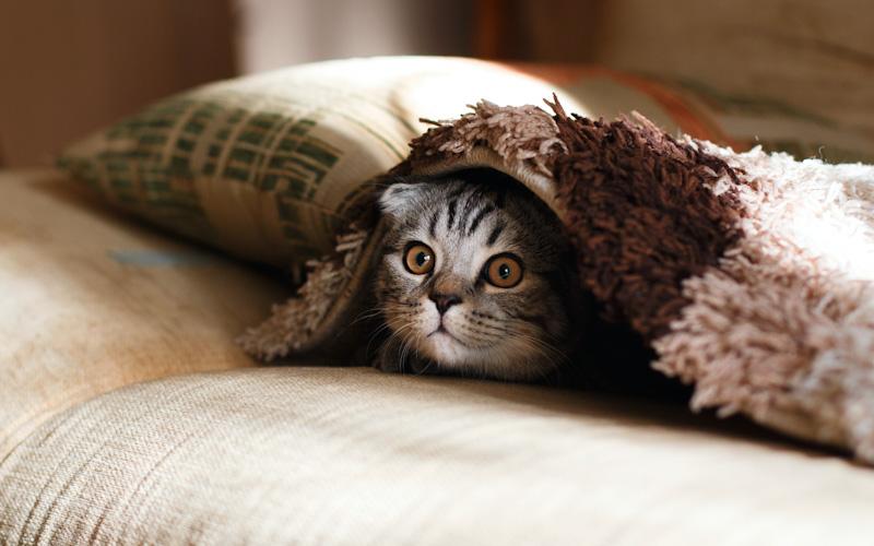 慌てない冷静な猫