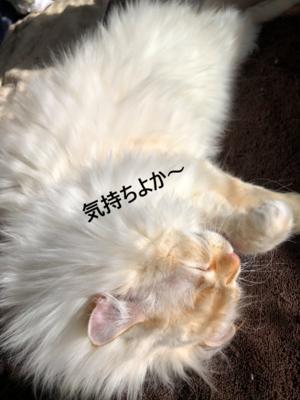 f:id:MofuMama:20210201071728p:plain