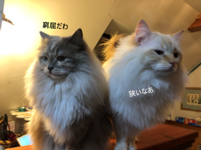 f:id:MofuMama:20210211235850p:plain