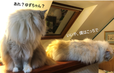 f:id:MofuMama:20210212001525p:plain