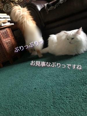 f:id:MofuMama:20210805053919j:plain