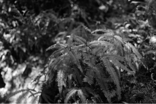 ライカqで撮影。草