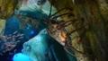 [アカイセエビ][イセエビ科][エビ目][甲殻類][サンシャイン水族館]