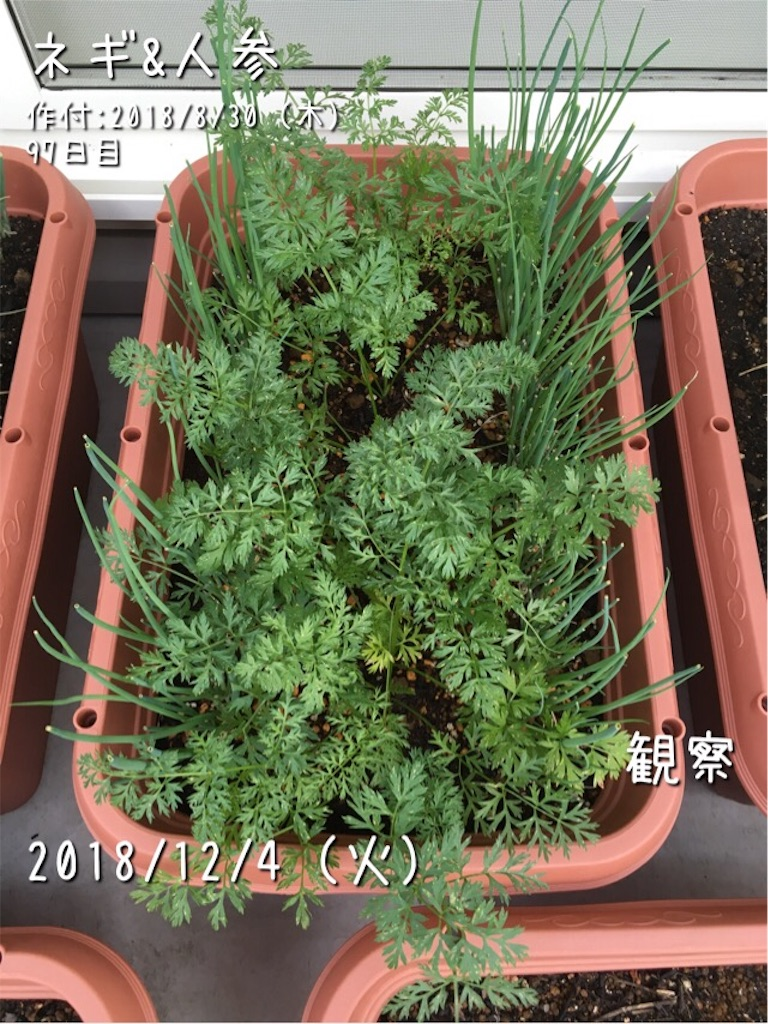 f:id:Mt_vegetable:20181204080548j:image