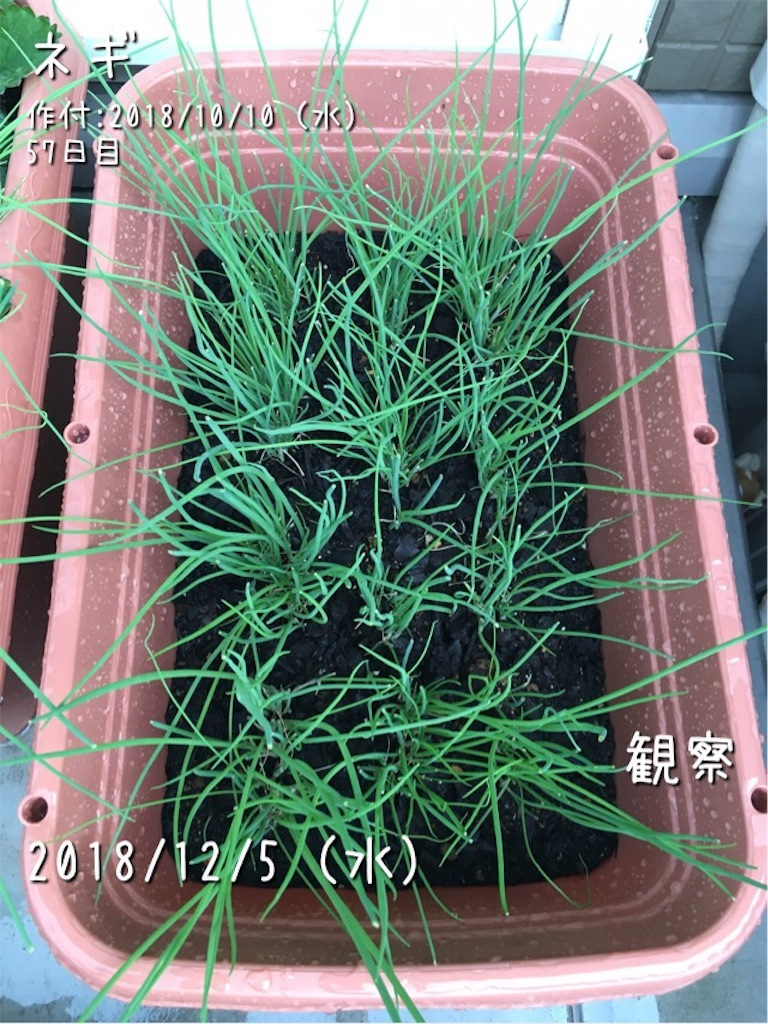 f:id:Mt_vegetable:20181205082100j:image