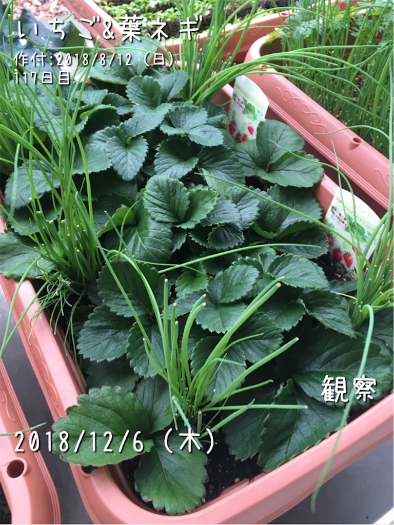 f:id:Mt_vegetable:20181206094452j:image