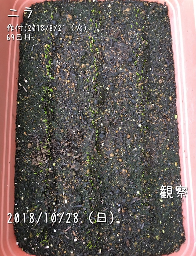 f:id:Mt_vegetable:20181207171952j:image