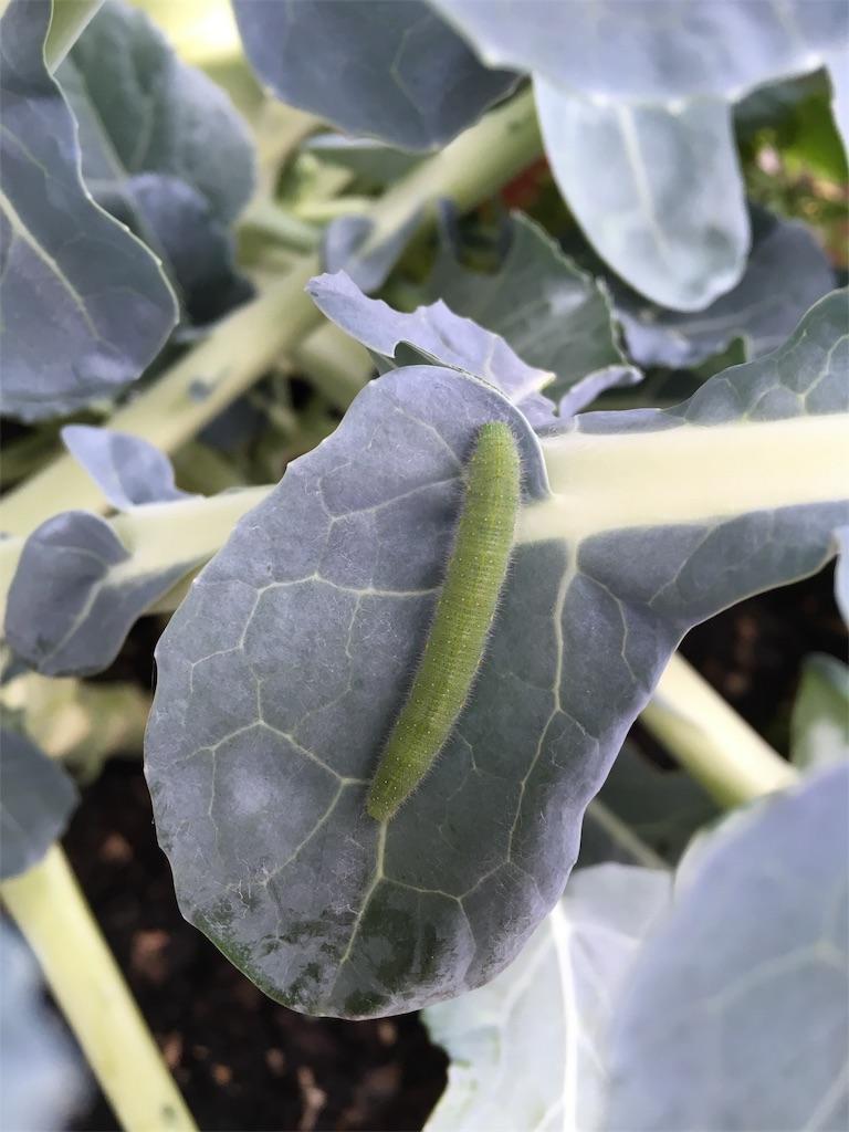 f:id:Mt_vegetable:20181209150502j:image