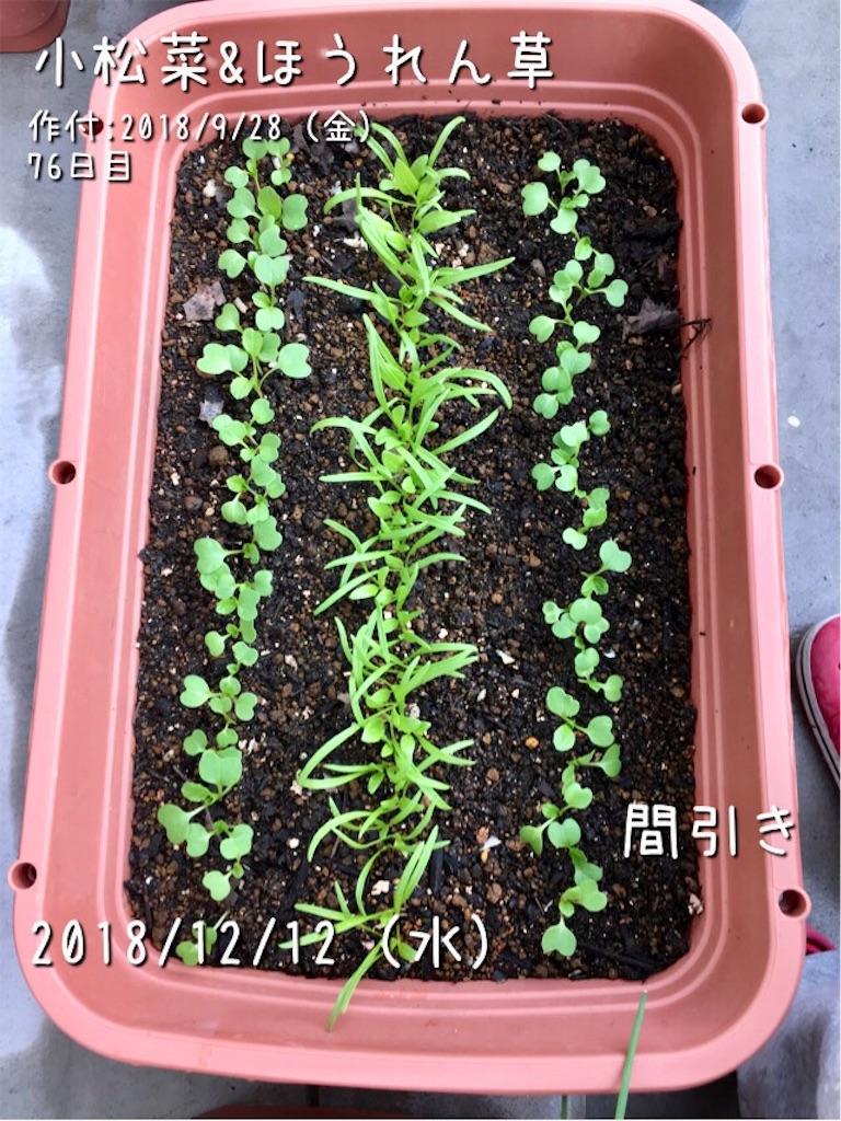 f:id:Mt_vegetable:20181212150245j:image