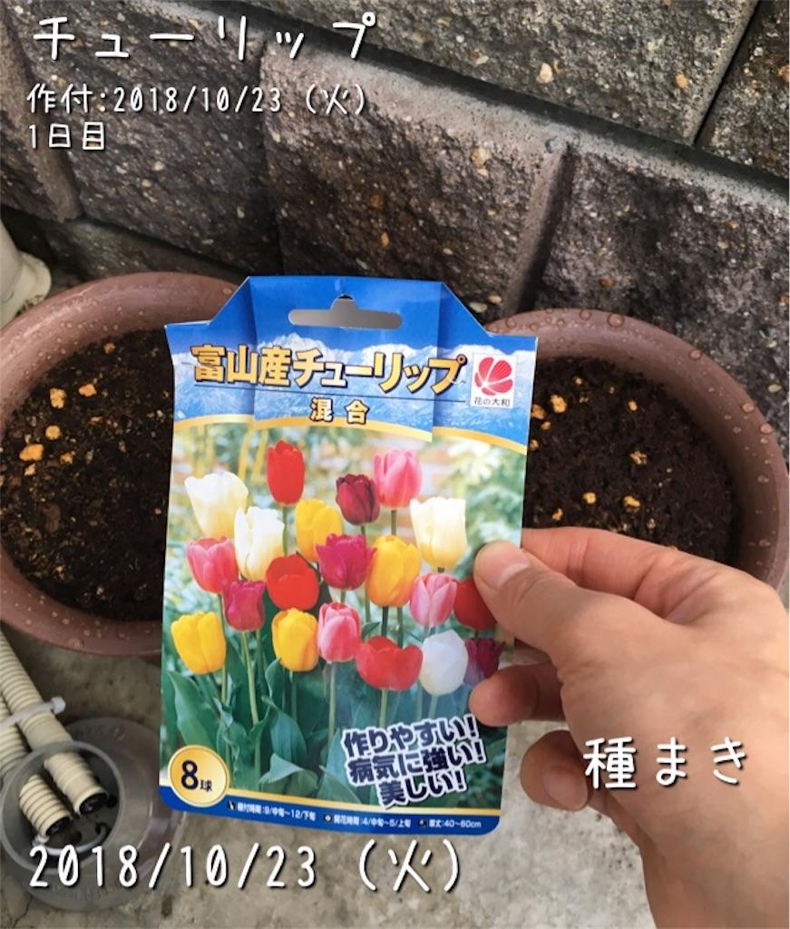 f:id:Mt_vegetable:20181213153244j:image