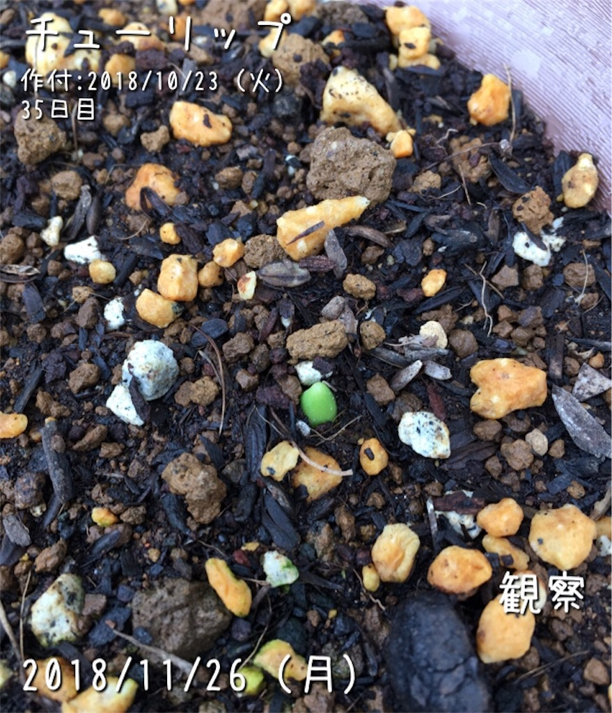 f:id:Mt_vegetable:20181213153305j:image